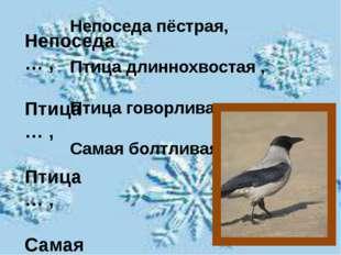 Непоседа … , Птица … , Птица … , Самая … . Непоседа пёстрая, Птица длиннохво