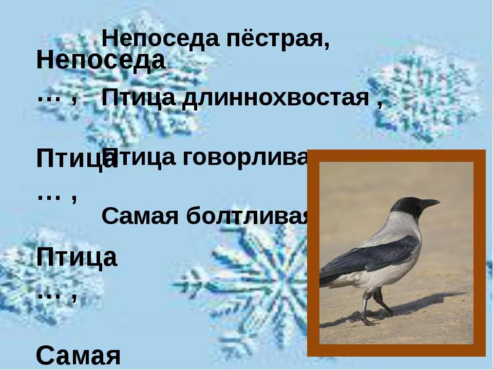 Непоседа … , Птица … , Птица … , Самая … . Непоседа пёстрая, Птица длиннохво...