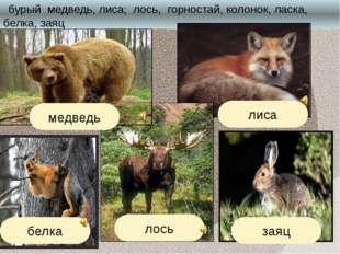бурый медведь, лиса; лось, горностай, колонок, ласка, белка, заяц лиса белка