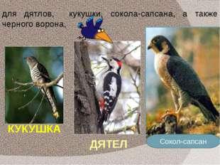 КУКУШКА Сокол-сапсан ДЯТЕЛ для дятлов, кукушки, сокола-сапсана, а также черно