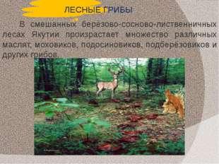 ЛЕСНЫЕ ГРИБЫ В смешанных берёзово-сосново-лиственничных лесах Якутии произрас