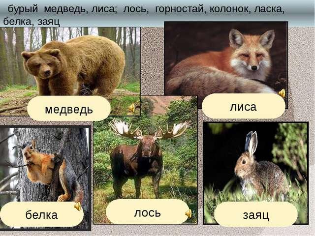 бурый медведь, лиса; лось, горностай, колонок, ласка, белка, заяц лиса белка...