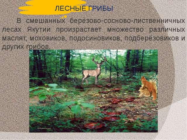 ЛЕСНЫЕ ГРИБЫ В смешанных берёзово-сосново-лиственничных лесах Якутии произрас...