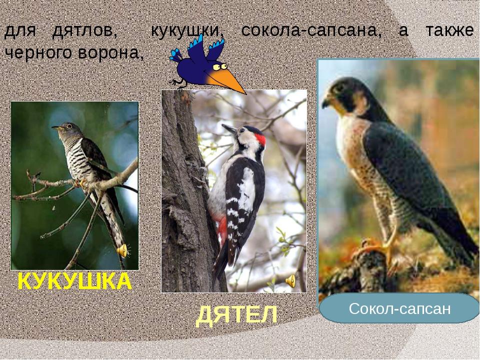 КУКУШКА Сокол-сапсан ДЯТЕЛ для дятлов, кукушки, сокола-сапсана, а также черно...