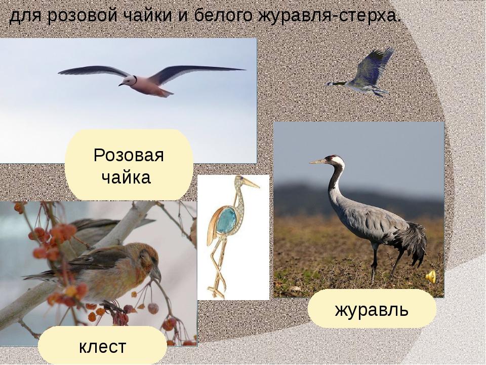 для розовой чайки и белого журавля-стерха. Розовая чайка журавль клест