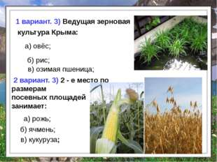 б) рис; в) озимая пшеница; а) овёс; 1 вариант. 3) Ведущая зерновая культура