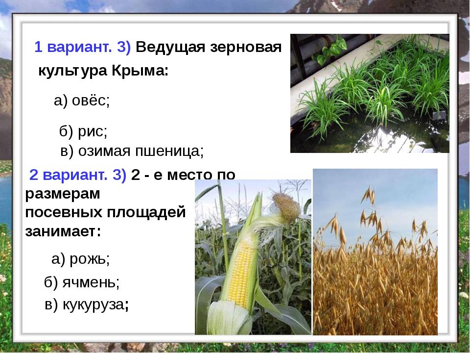 б) рис; в) озимая пшеница; а) овёс; 1 вариант. 3) Ведущая зерновая культура...