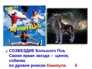 СОЗВЕЗДИЕ Большого Пса. Самая яркая звезда – щенок, собачка по древне римски