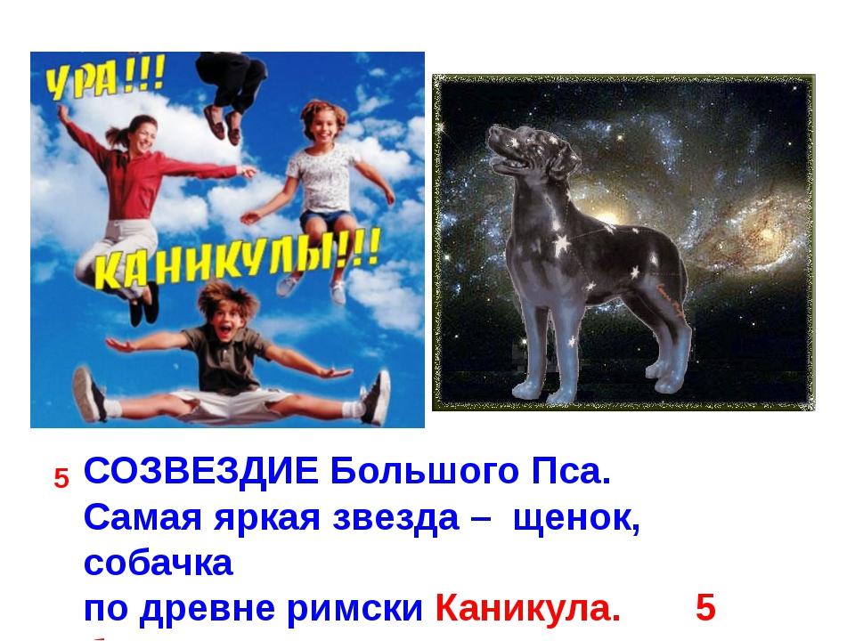 СОЗВЕЗДИЕ Большого Пса. Самая яркая звезда – щенок, собачка по древне римски...