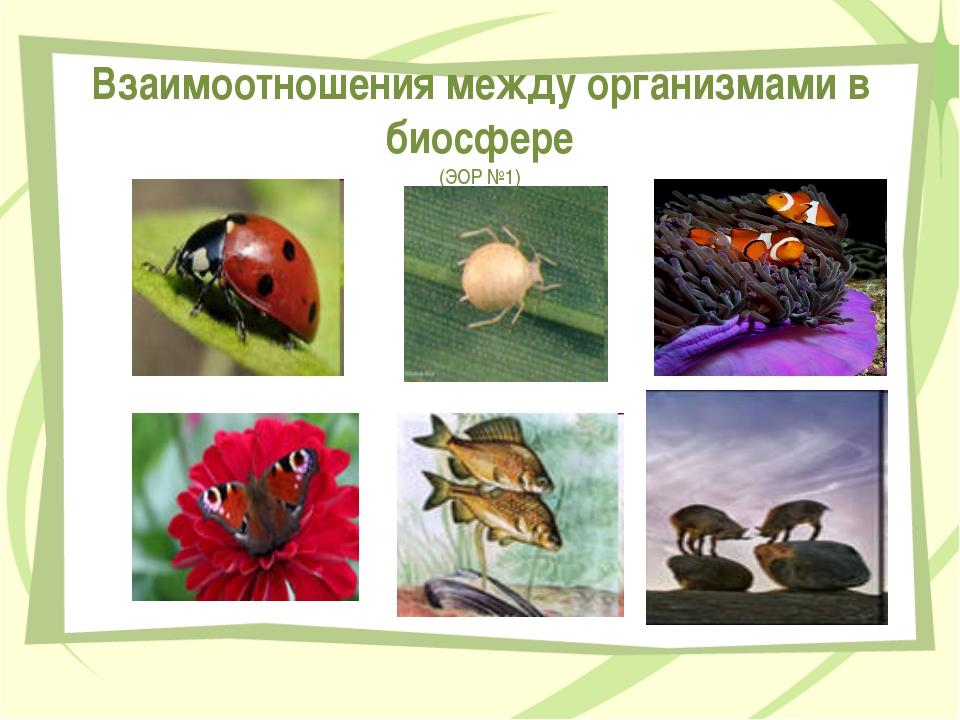 Взаимоотношения между организмами в биосфере (ЭОР №1) Передельская Т.В.