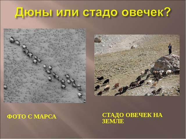 ФОТО С МАРСА СТАДО ОВЕЧЕК НА ЗЕМЛЕ