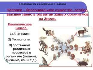 Биологическое и социальное в человеке Человек – биосоциальное существо, особо