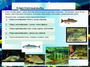 Класс Костные рыбы. Класс костные рыбы - самая многочисленная группа позвоно