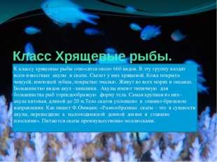 Класс Хрящевые рыбы. К классу хрящевые рыбы относятся около 660 видов. В эту
