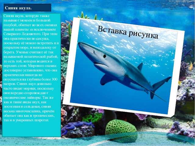 Синяя акула. Синяя акула, которую также называют мокоем и большой голубой, об...