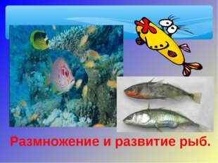 Размножение и развитие рыб.