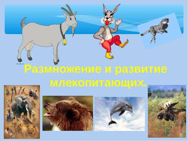 Размножение и развитие млекопитающих.