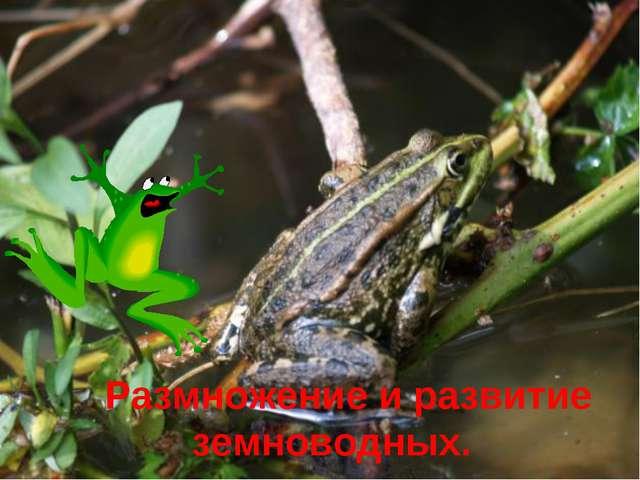 Размножение и развитие земноводных.