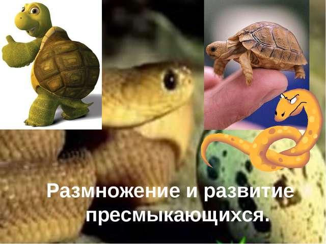 Размножение и развитие пресмыкающихся.