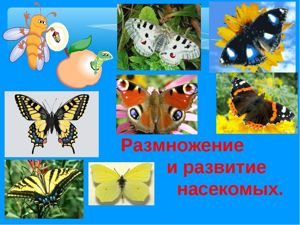 Размножение и развитие насекомых.