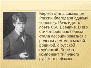 Береза стала символом России благодаря одному человеку. Речь идет о поэте С.