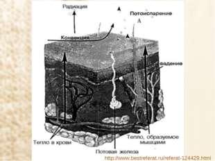 http://www.bestreferat.ru/referat-124429.html