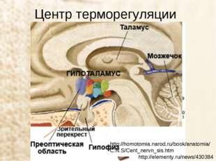 Центр терморегуляции http://elementy.ru/news/430384 http://homotomia.narod.ru