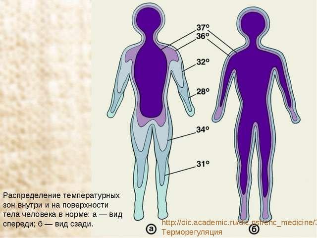 Распределение температурных зон внутри и на поверхности тела человека в норме...