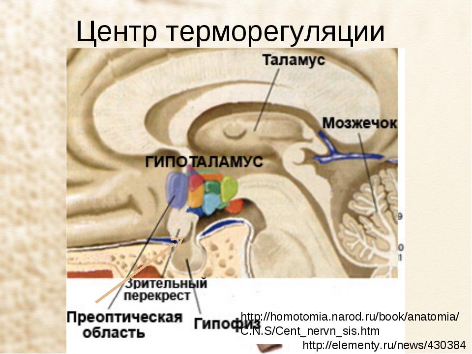 Центр терморегуляции http://elementy.ru/news/430384 http://homotomia.narod.ru...