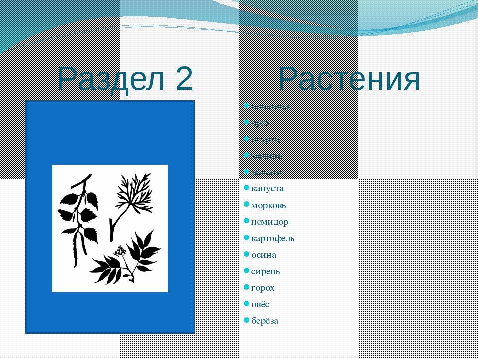 Раздел 2 Растения пшеница орех огурец малина яблоня капуста морковь помидор к...