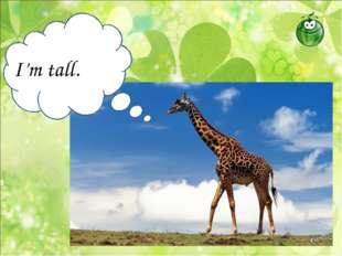 I'm tall.