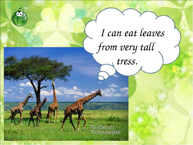 I can eat leaves from very tall tress.