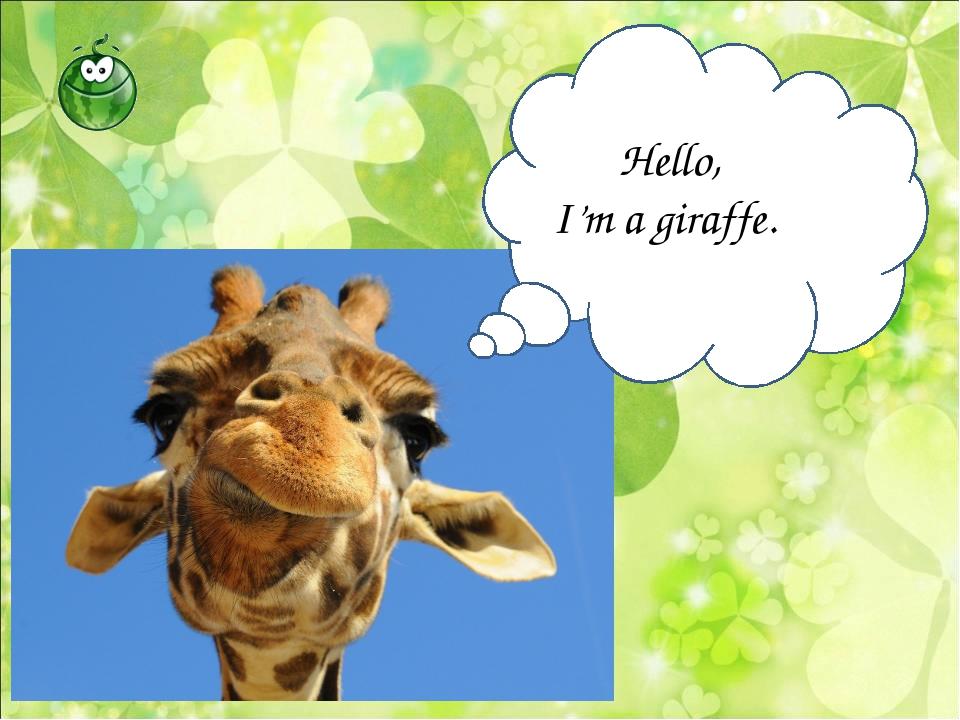 Hello, I'm a giraffe.