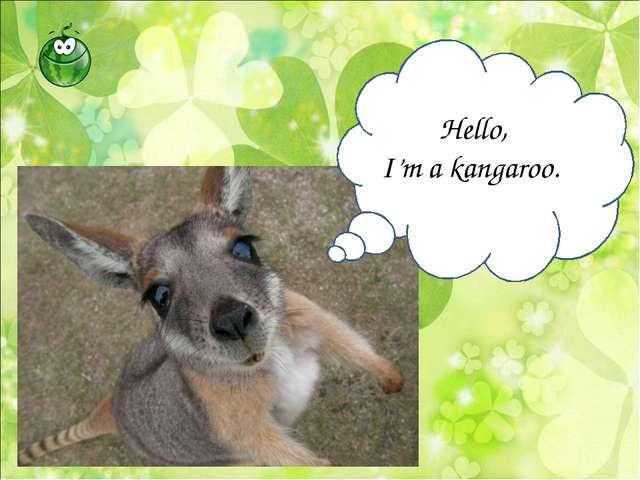 Hello, I'm a kangaroo.