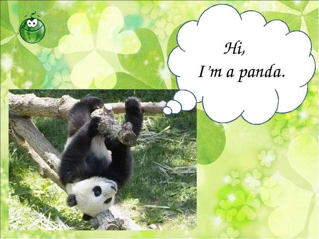 Hi, I'm a panda.