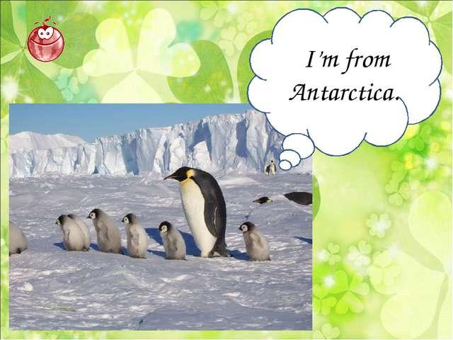 I'm from Antarctica.