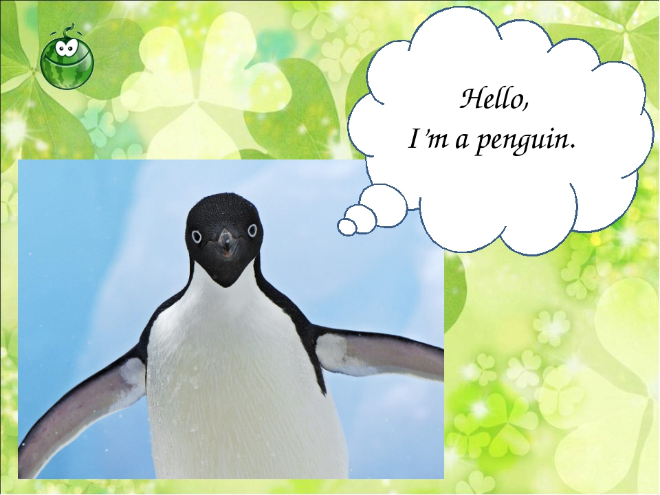 Hello, I'm a penguin.