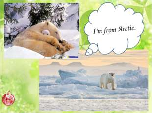 I'm from Arctic.