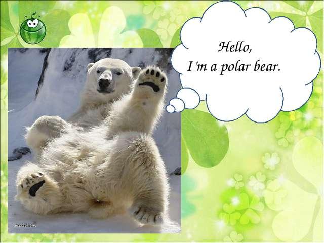 Hello, I'm a polar bear.