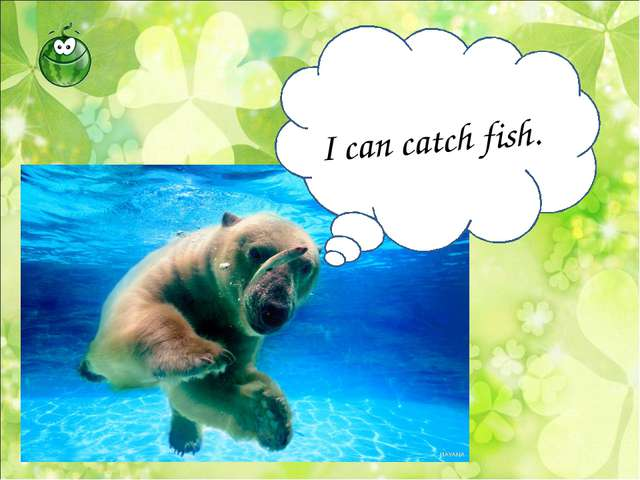 I can catch fish.