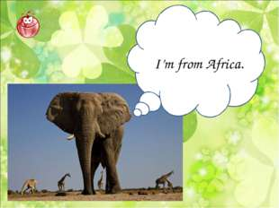 I'm from Africa.