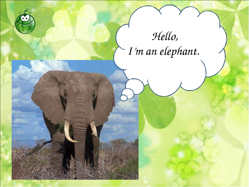 Hello, I'm an elephant.