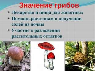 Группы животных по типам питания Растительноядные животные, которым нужна рас