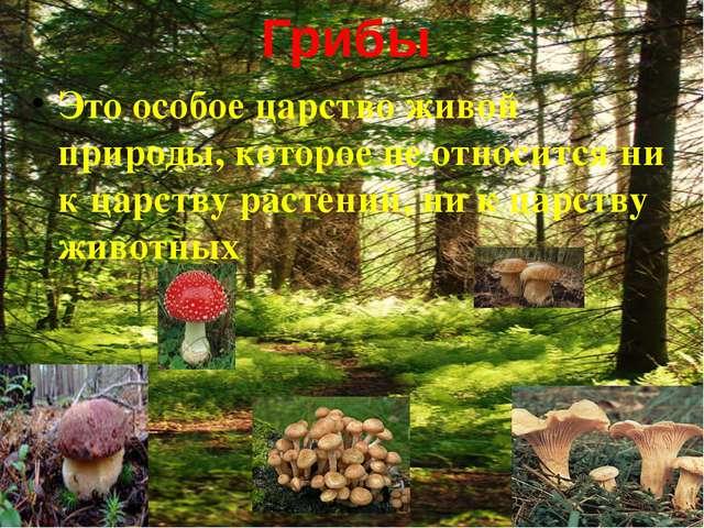 Значение грибов Лекарство и пища для животных Помощь растениям в получении со...