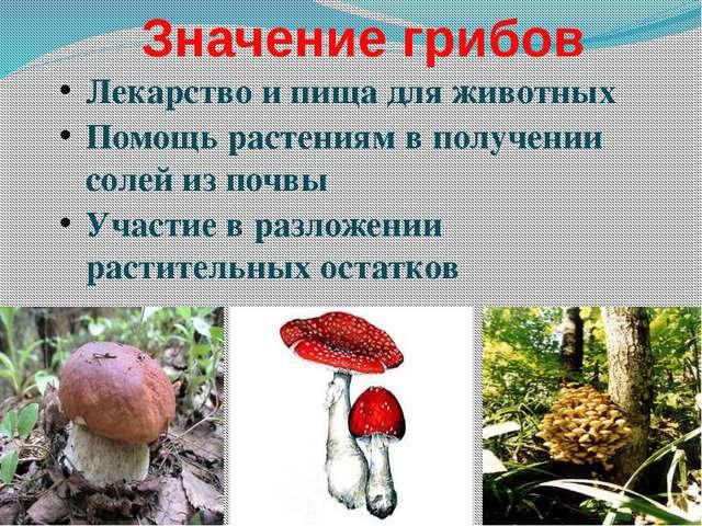 Группы животных по типам питания Растительноядные животные, которым нужна рас...
