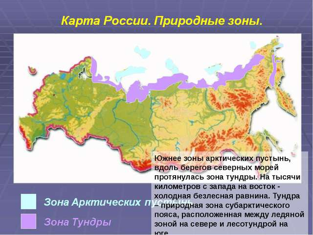 Южнее зоны арктических пустынь, вдоль берегов северных морей протянулась зона...