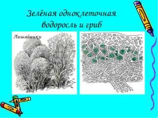 Зелёная одноклеточная водоросль и гриб Лишайники
