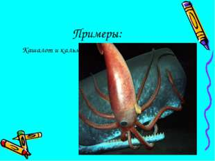 Примеры: Кашалот и кальмары
