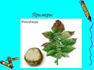 Примеры: Фитофтора
