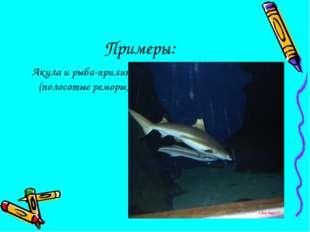 Примеры: Акула и рыба-прилипала (полосатые реморы)